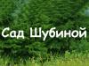 САД ШУБИНОЙ Новосибирск